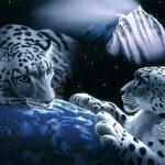 mystic-lion_snow-leopards.jpg