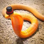 Vamers-Ermahgerd-Forget-Snakes-on-a-Plane-It-Is-All-About-Snakes-Wearing-Hats-Top-Hat-Snake.jpg